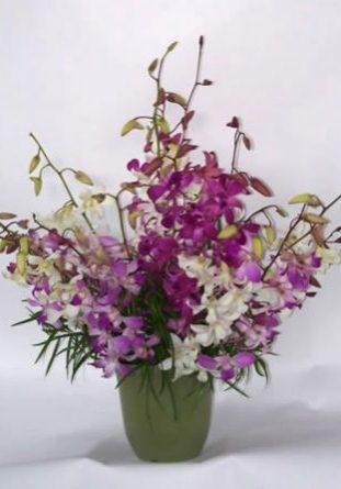 Orchid Splash