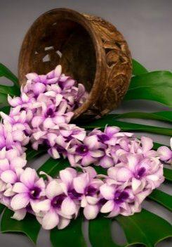 Dendrobium Lei Double 0128- web